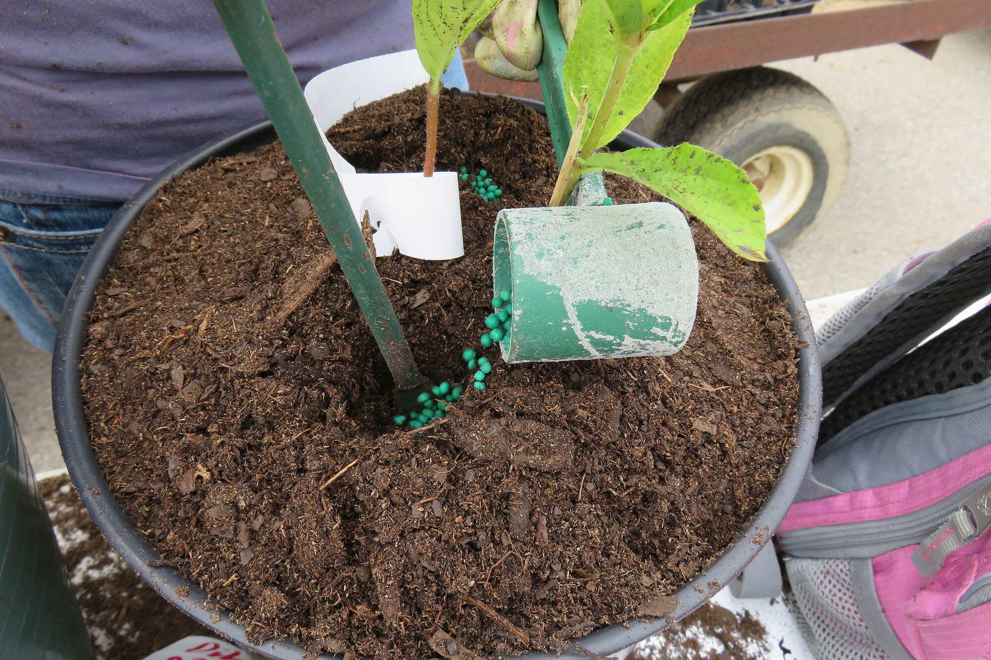 dibbling fertilizer into a plant in a pot