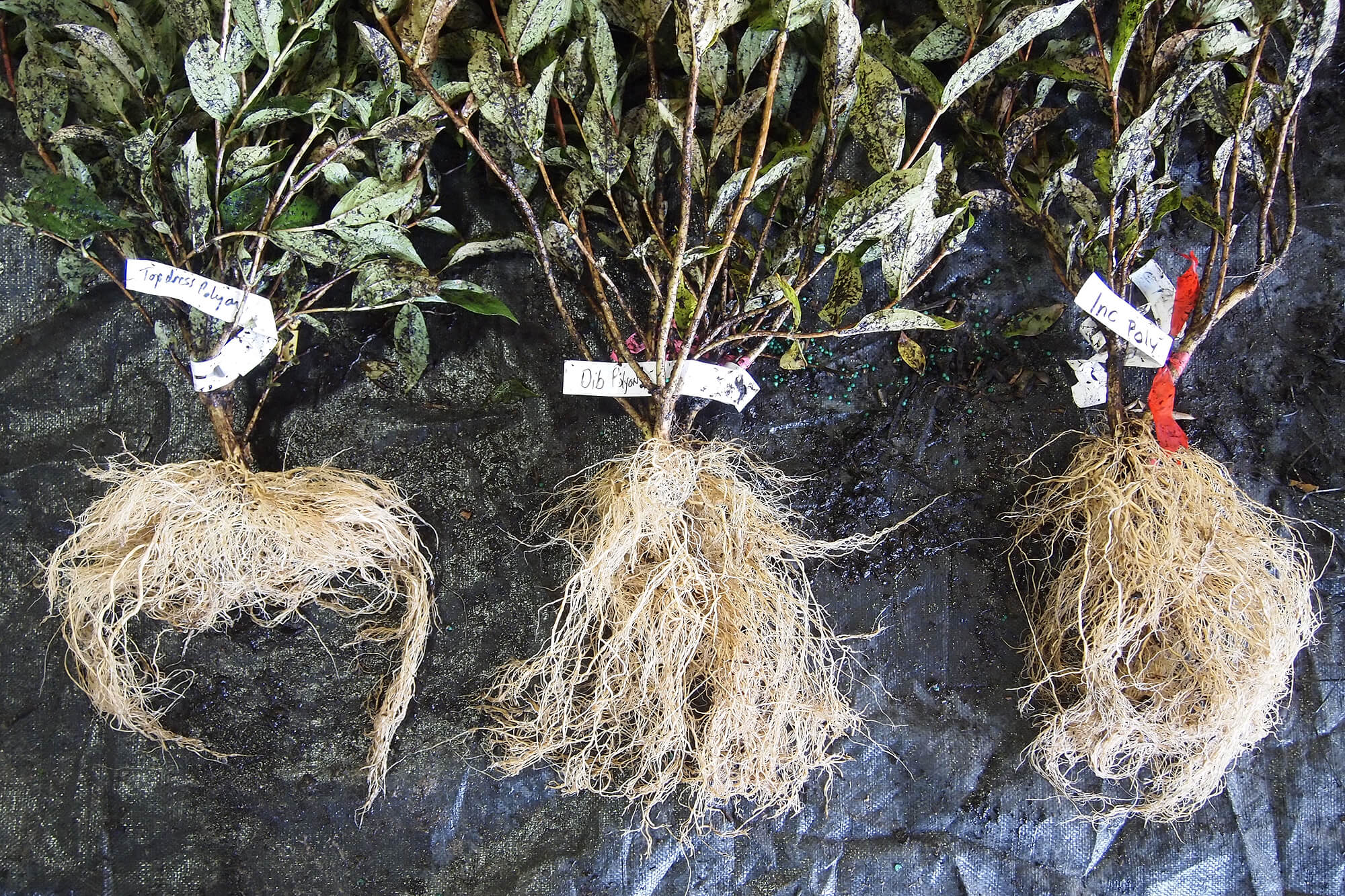 three various samples of plant roots for comparison