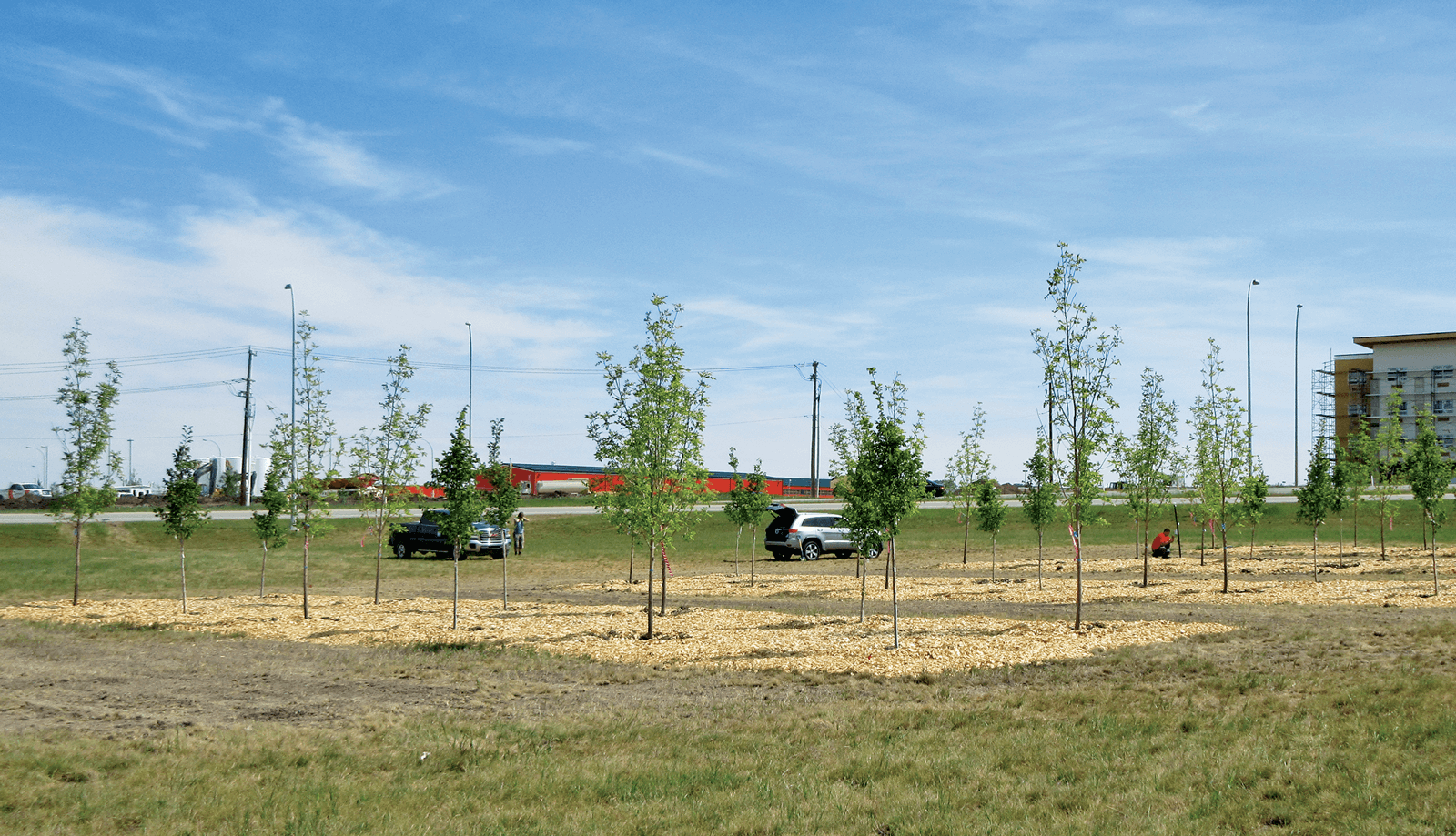 Improving soils for success - Landscape Ontario