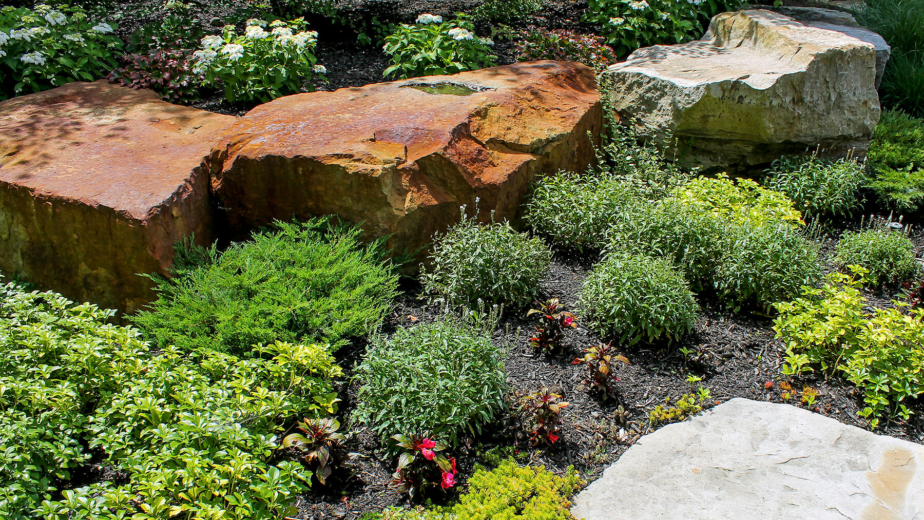 a rock garden with plants
