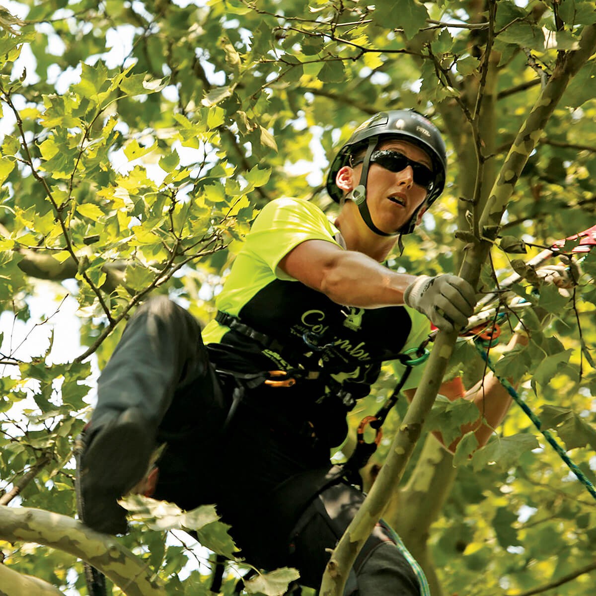 woman in a tree with safety harness on