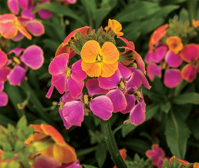New Perennials For Spring 2020