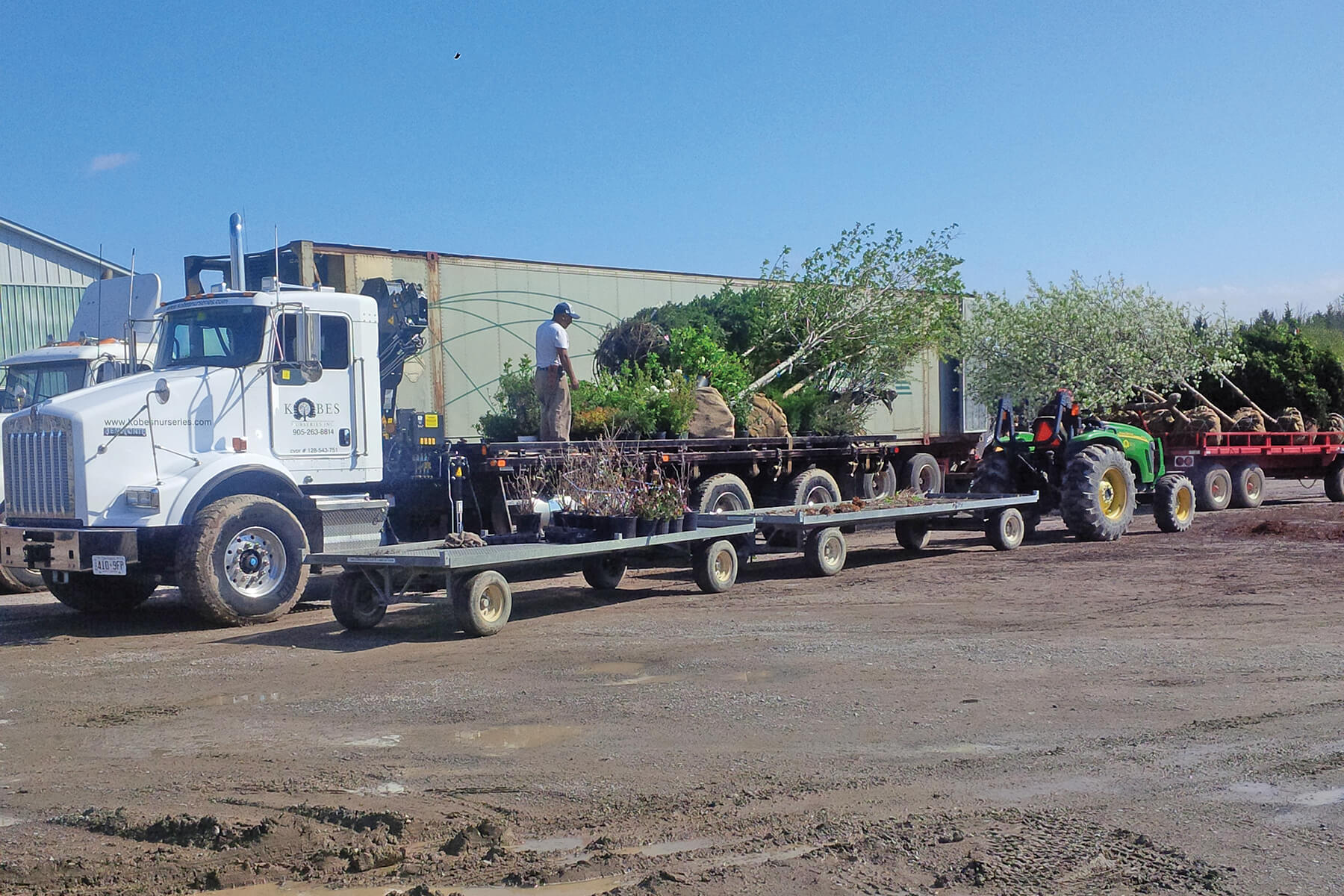 large flatbed truck loaded with trees