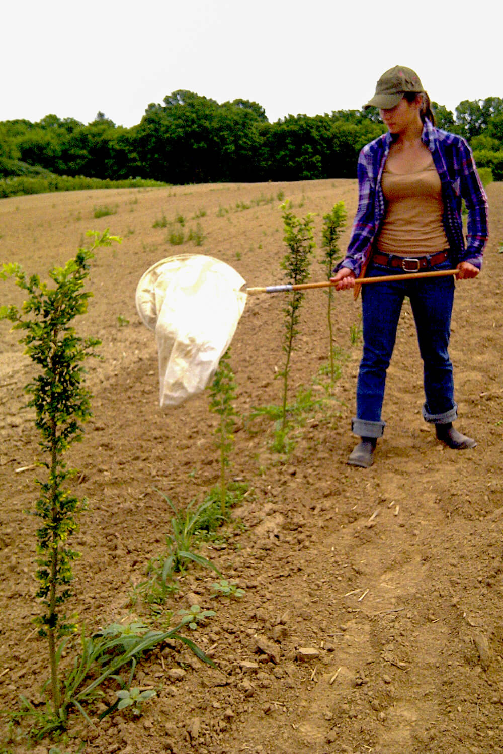 woman holding a butterfly net in a nursery field